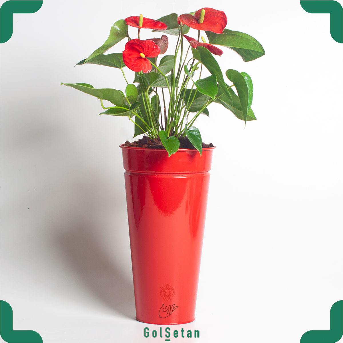 آنتوریوم در گلدان فلزی